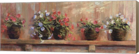 Framed Petunias in Pots Print