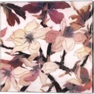 Magnolias XX Fine-Art Print