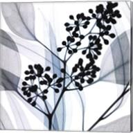 Eucalyptus Fine-Art Print