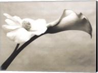 Calla-Anemone Fine-Art Print