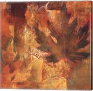 Flow of Maple Fine-Art Print