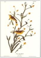 Yellow Red-Poll Warbler Fine-Art Print
