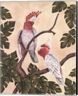 White Mitchell Cockatoos Fine-Art Print