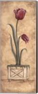 Regal Tulip Fine-Art Print