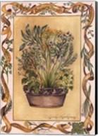 Culinary Herbs Fine-Art Print