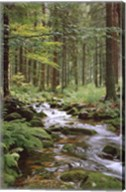 Stream in Forest Wall Poster