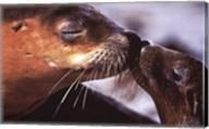 Seals Fine-Art Print