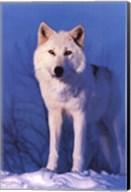 Montana Wolf Wall Poster