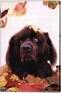 Dog in Leaves Fine-Art Print