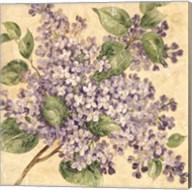 Lilac Fine-Art Print