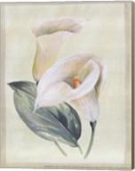 Calla Lily I Fine-Art Print