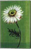 Flower on Green Fine-Art Print