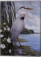 Great Blue Heron Fine-Art Print