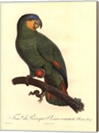 Parrot, PL 110 Fine-Art Print