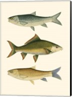 Antique Fish I Fine-Art Print