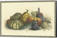 Melons and Gourds Fine-Art Print