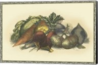 Vegetables from the Earth Fine-Art Print