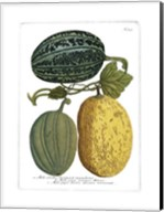 Antique Melons I Fine-Art Print