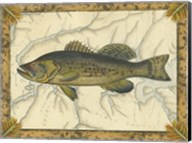 Black Bass on Map Fine-Art Print