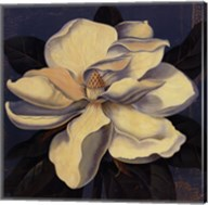 Glowing Magnolia Fine-Art Print