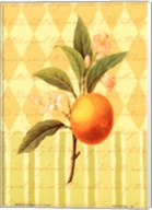 Botanical Orange Fine-Art Print