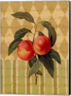 Botanical Peaches Fine-Art Print