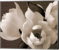 Winter Magnolia I Fine-Art Print