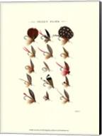 Trout Flies II Fine-Art Print