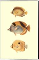 Antique Tropical Fish I Fine-Art Print