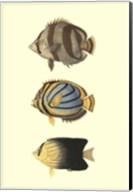 Antique Tropical Fish IV Fine-Art Print