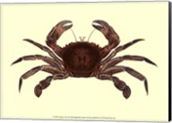 Antique Crab II Fine-Art Print