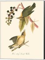 Audubon's Warbler Fine-Art Print
