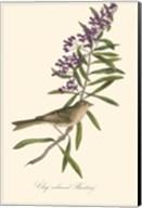 Audubon's Bunting Fine-Art Print