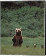 Grizzlies Fine-Art Print
