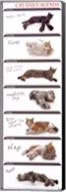 Cat Agenda Fine-Art Print
