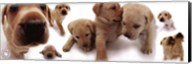 Dogs - Labrador Wall Poster