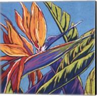 Birds of Paradise - Turquoise Fine-Art Print