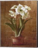 White Amaryllis on Bronze Fine-Art Print