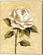 Elegant Rose Fine-Art Print