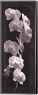 Orchid Opulence I Fine-Art Print
