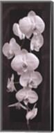 Orchid Opulence II Fine-Art Print