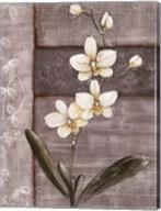 Orchid Shimmer I Fine-Art Print