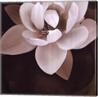 Amazon Lotus Fine-Art Print