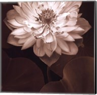 Lotus Welcome Fine-Art Print