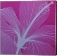 Hibiscussilver Fine-Art Print