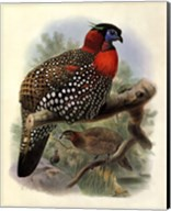 Native Pheasant I Fine-Art Print