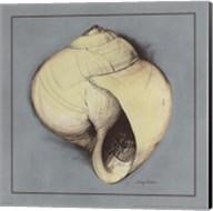 Coastal Shell I Fine-Art Print