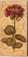 Red Passion Geranium - Petite Fine-Art Print