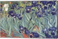 Irises, Saint-Remy, c.1889 Fine-Art Print