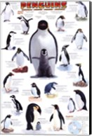 Penguins Chart Wall Poster